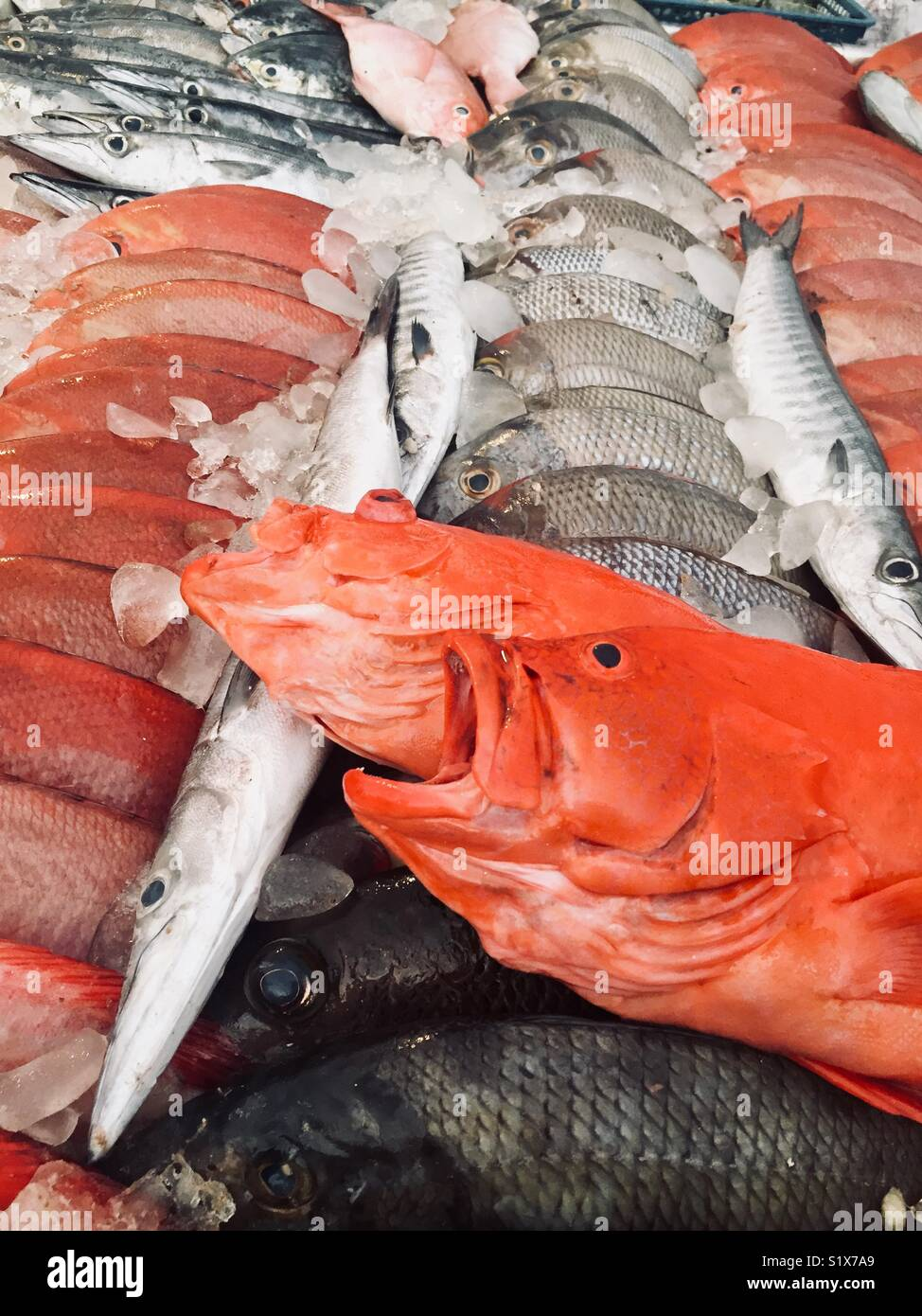 Fish Mouth Open Sale Stock Photos & Fish Mouth Open Sale Stock ...
