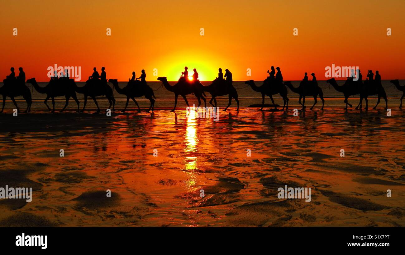 Camel rides on the beach at sunset. - Stock Image