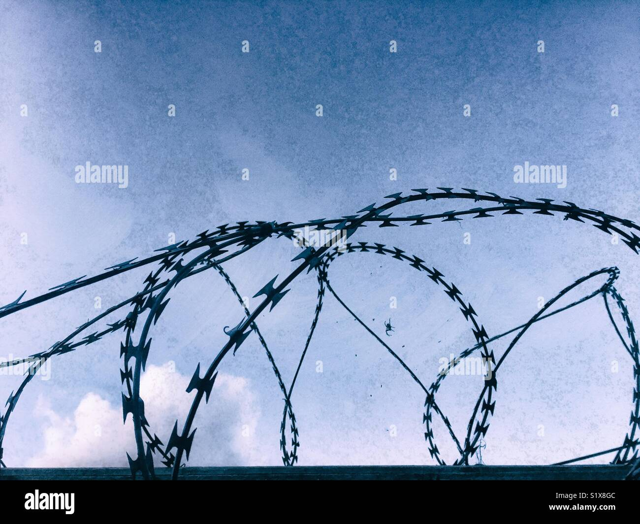 Razor wire close up with tiny spider - Stock Image