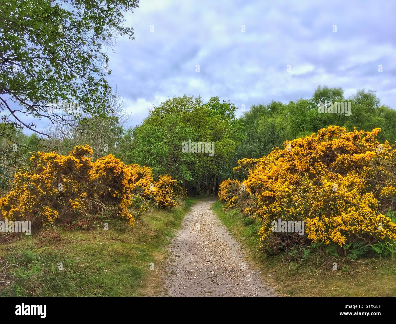 Gorse Line Offroad Track - Stock Image
