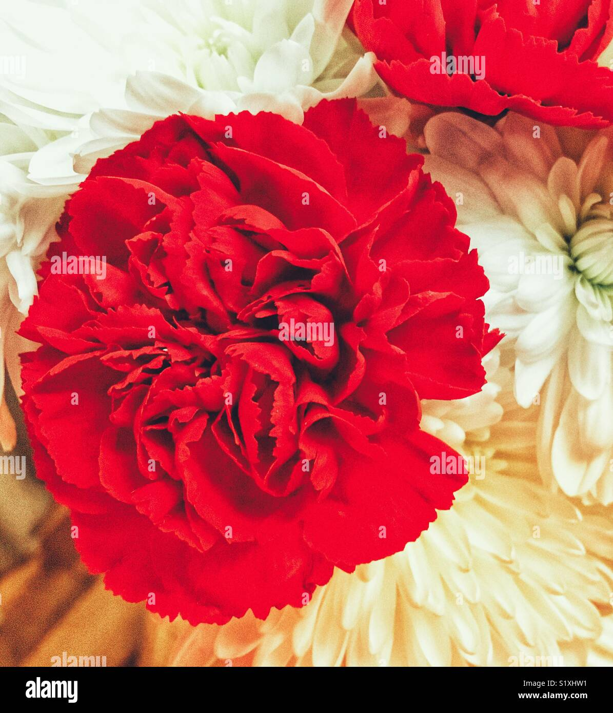 Red carnations and white chrysanthemums (mums) and white dahlias - Stock Image