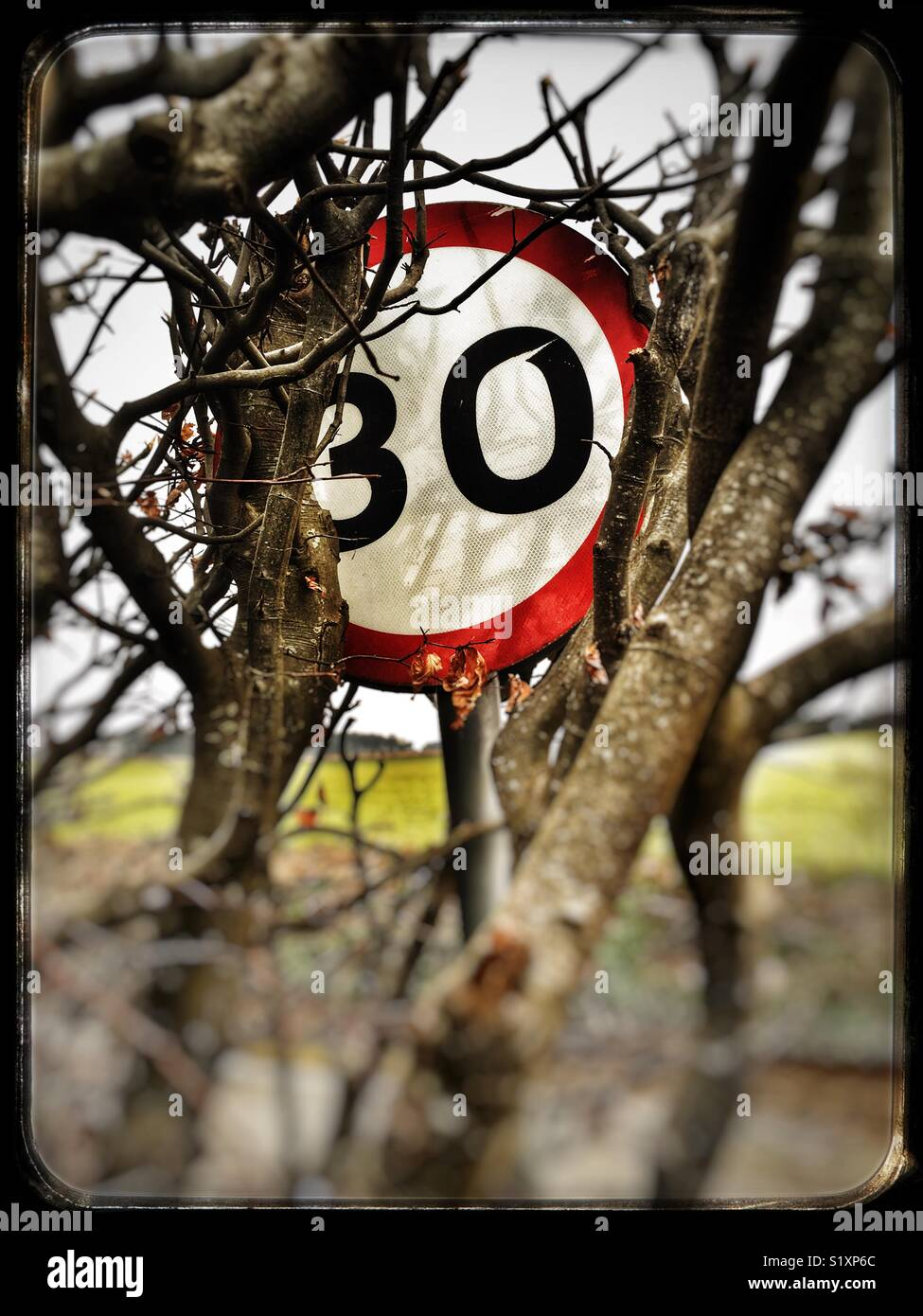 A hedge partly covering a 30mph road sign, Alderton, Suffolk, England. - Stock Image