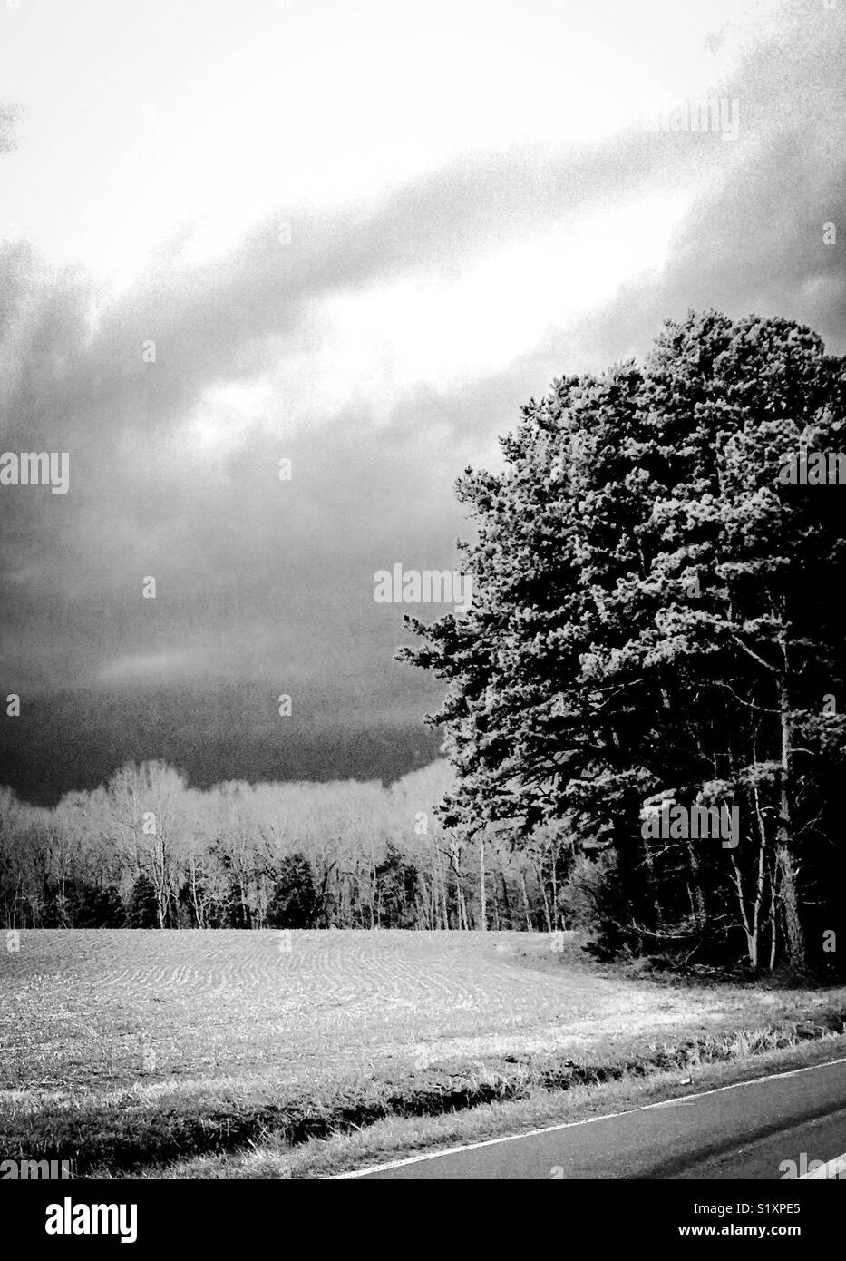 Black and white photo of overcast sky, line of trees, and field- February in North Carolina - Stock Image