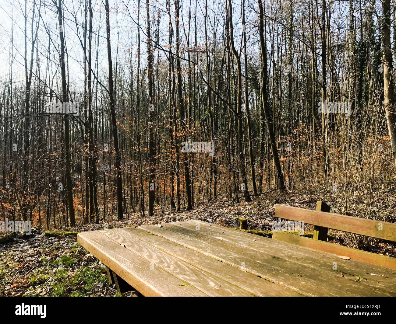 Resting place in a forest - Stock Image
