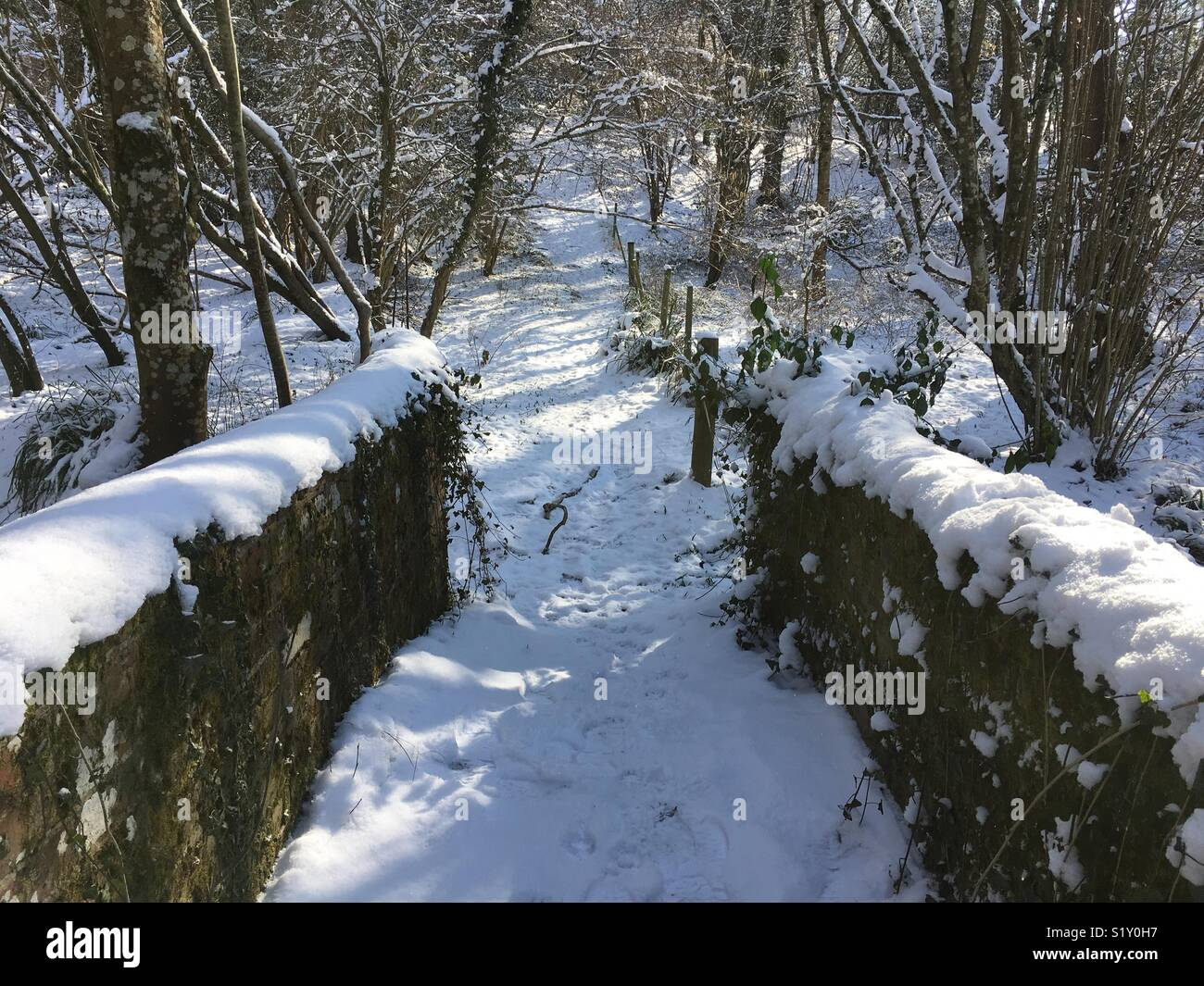 Woodland walk in the snow - Stock Image