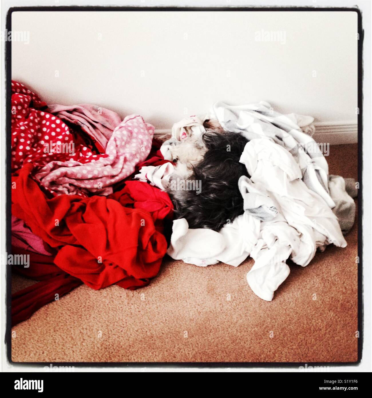 Dog sleeping in the white dirty laundry - Stock Image