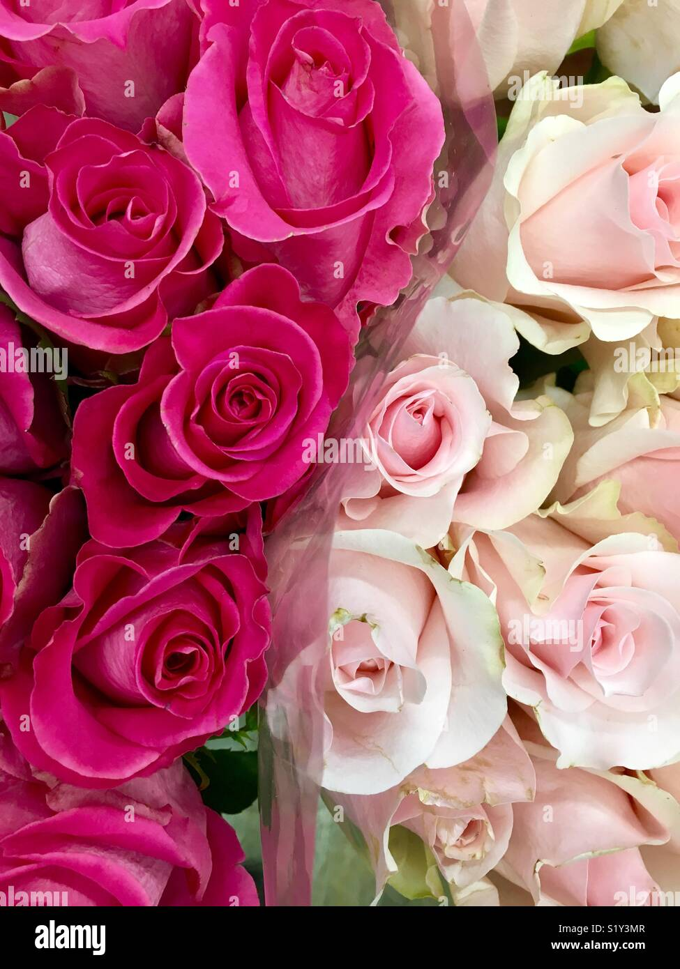 Two Pink Bouquets Of Roses One Dark And One Light Side By Side Stock