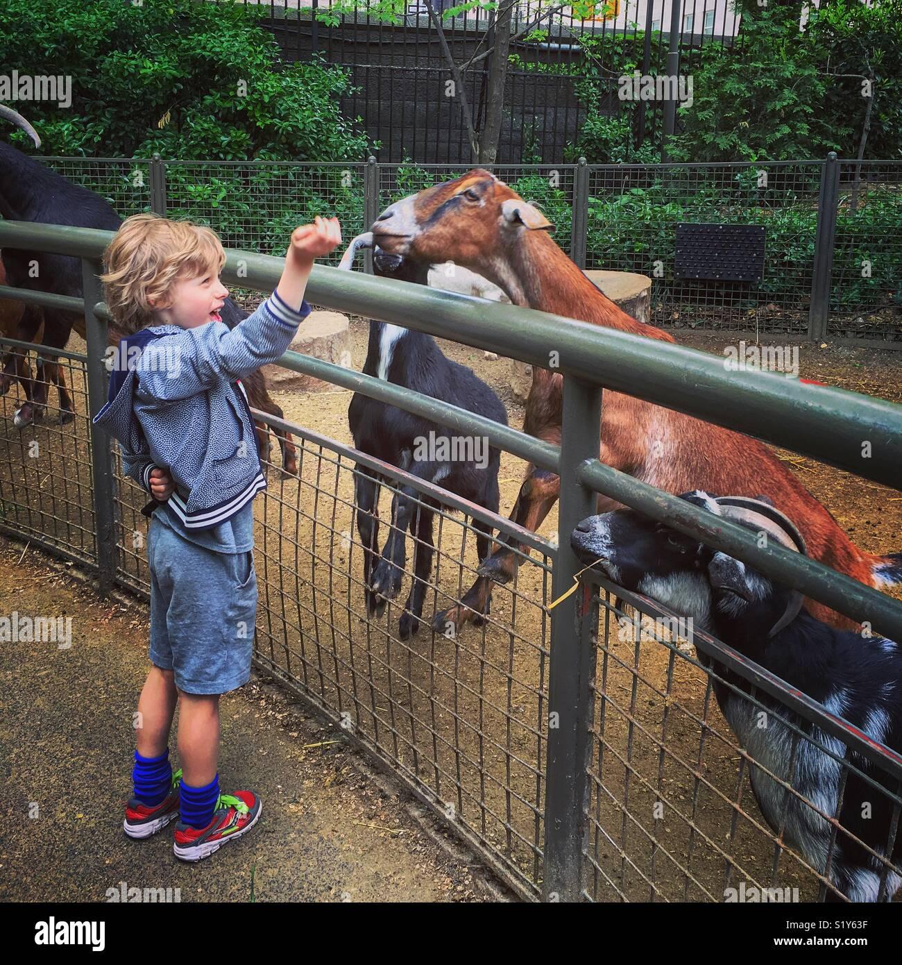 Boy feeding animals in petting zoo - Stock Image