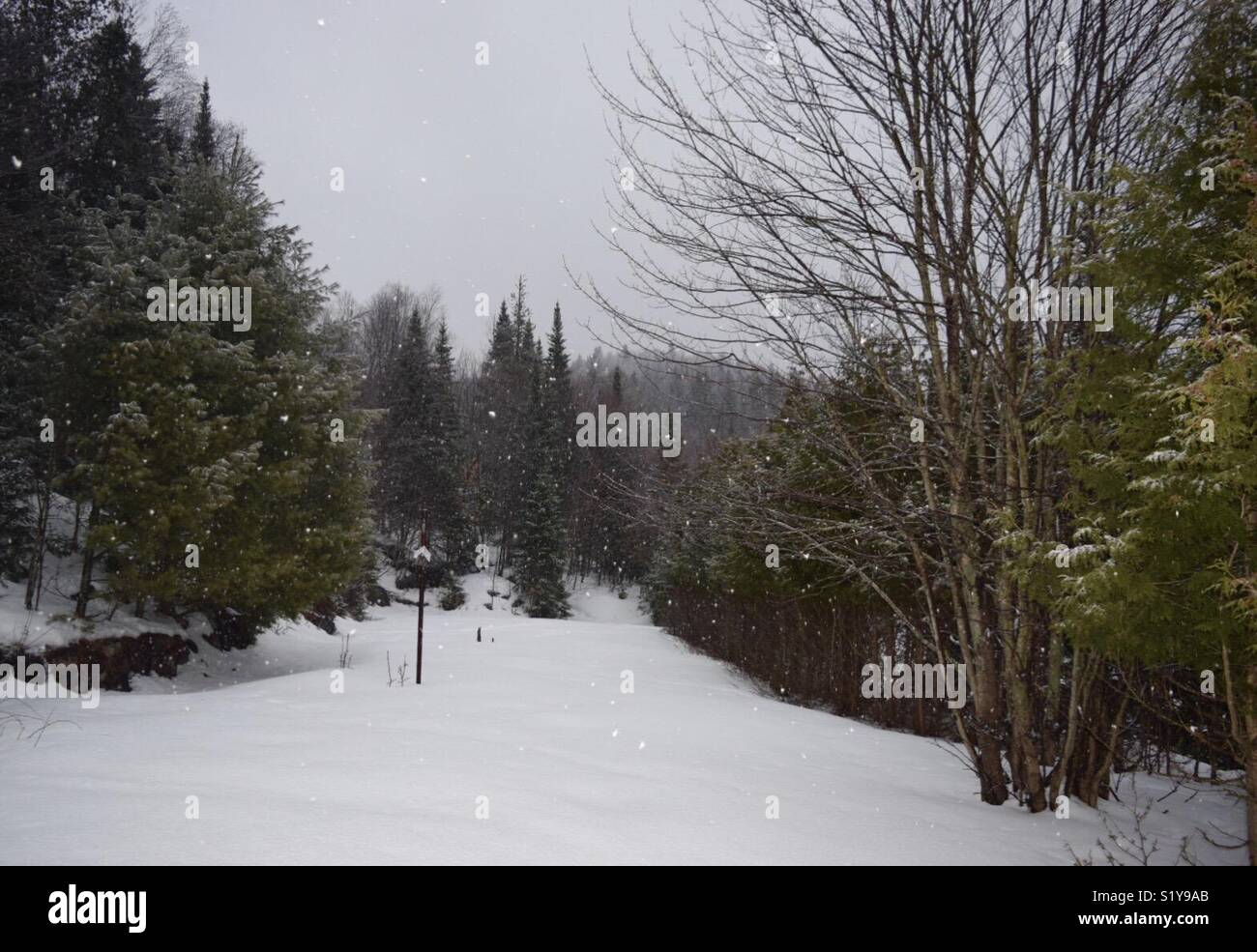 Winter landscape, snowing in the forest - Stock Image