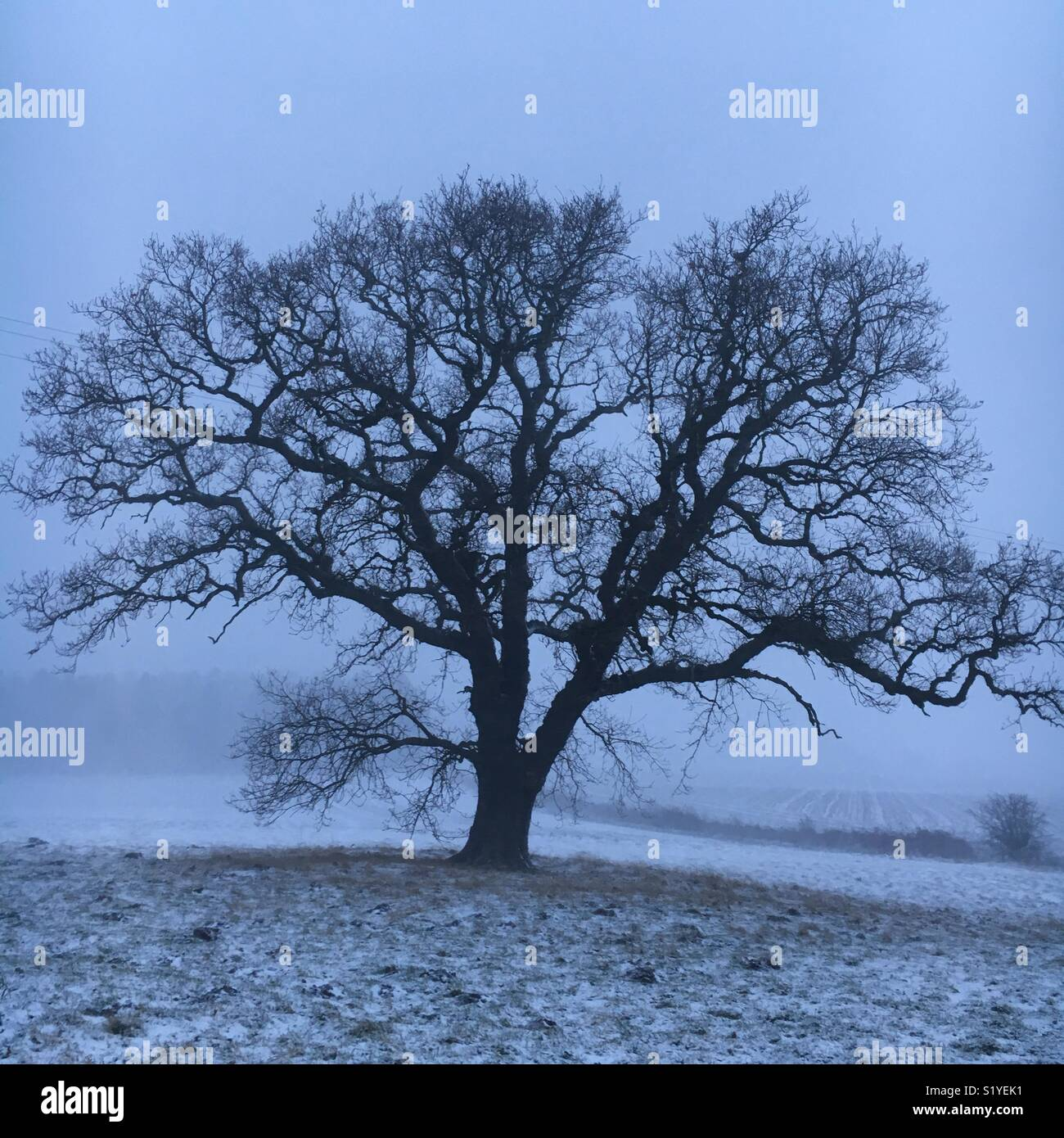 Cold looking landscape with single tree - Stock Image
