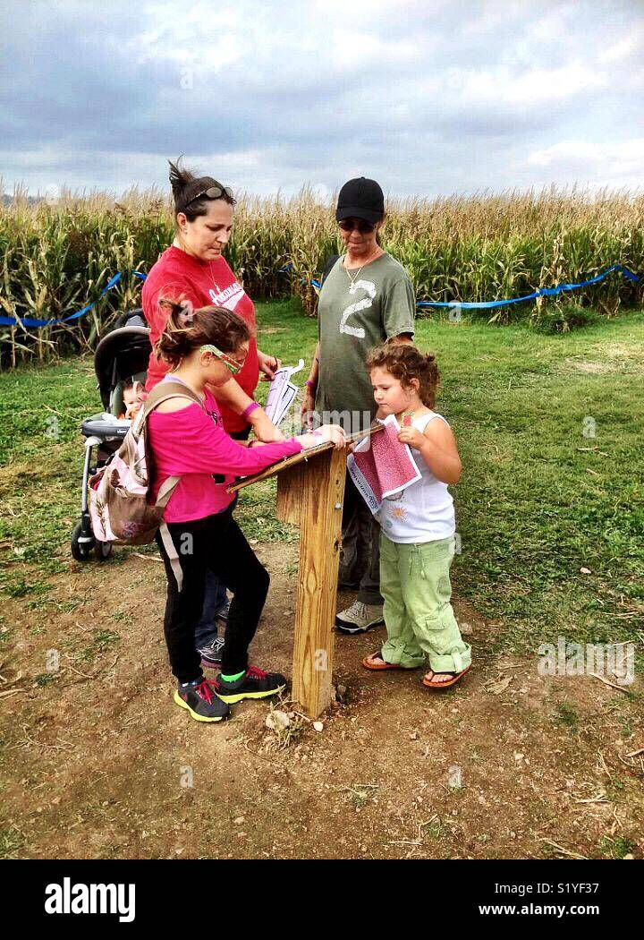 A family conducts a map while navigating a corn maze. - Stock Image