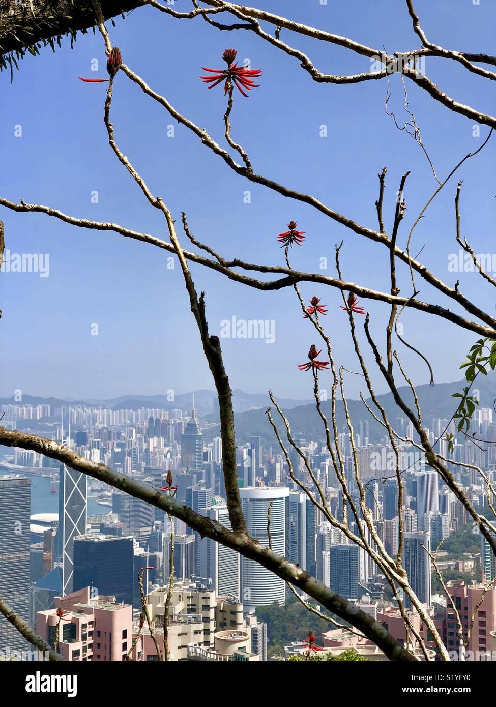 Hong Kong seen through blossoms and branches - Stock Image