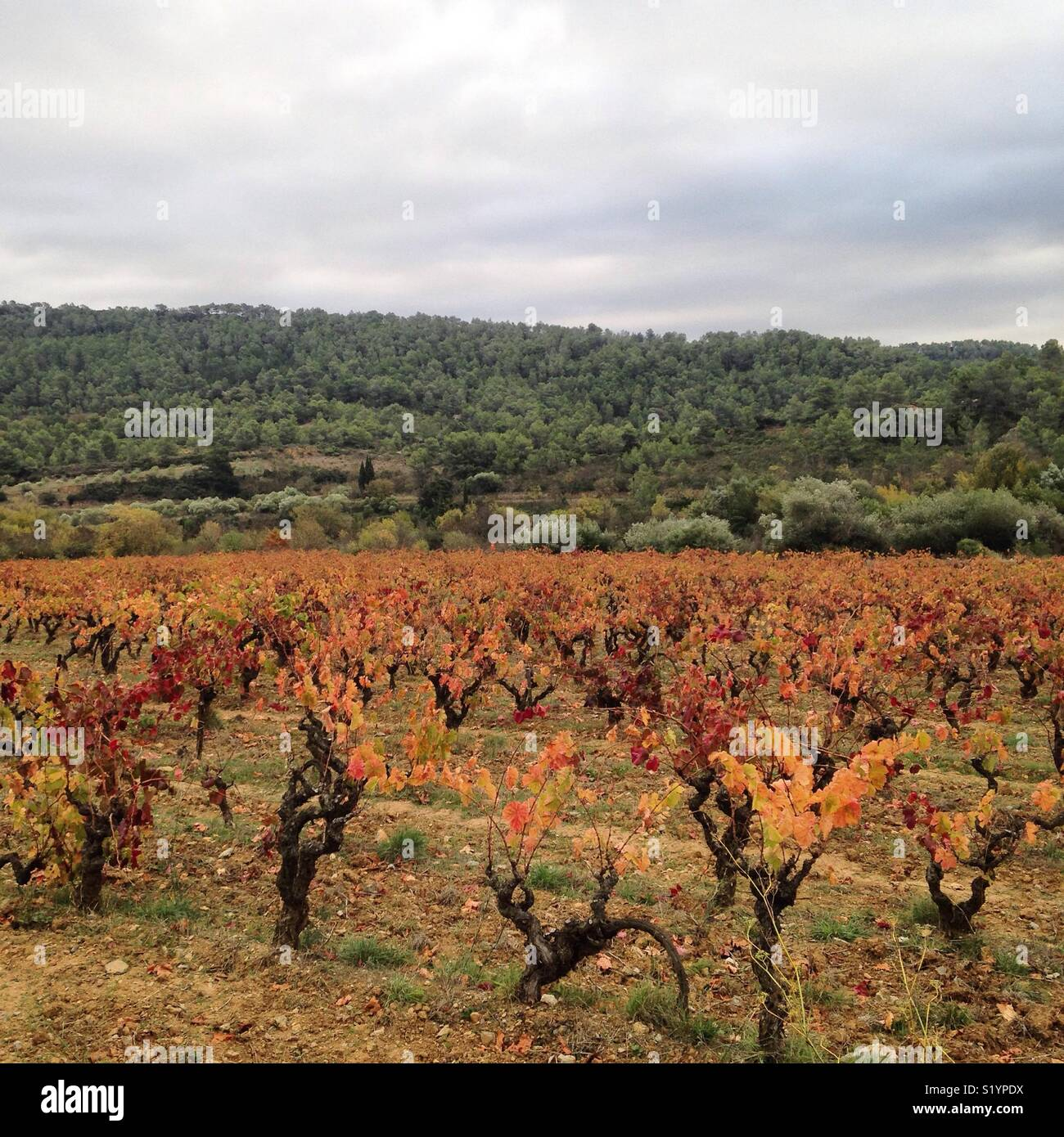 View of vineyards in the Corbières wine region of southern France Stock Photo
