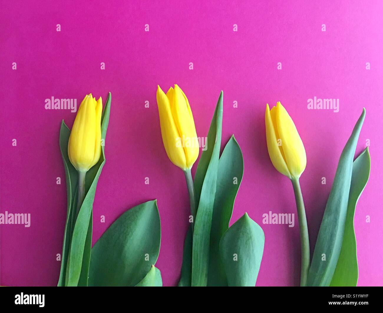 Three tulips. - Stock Image