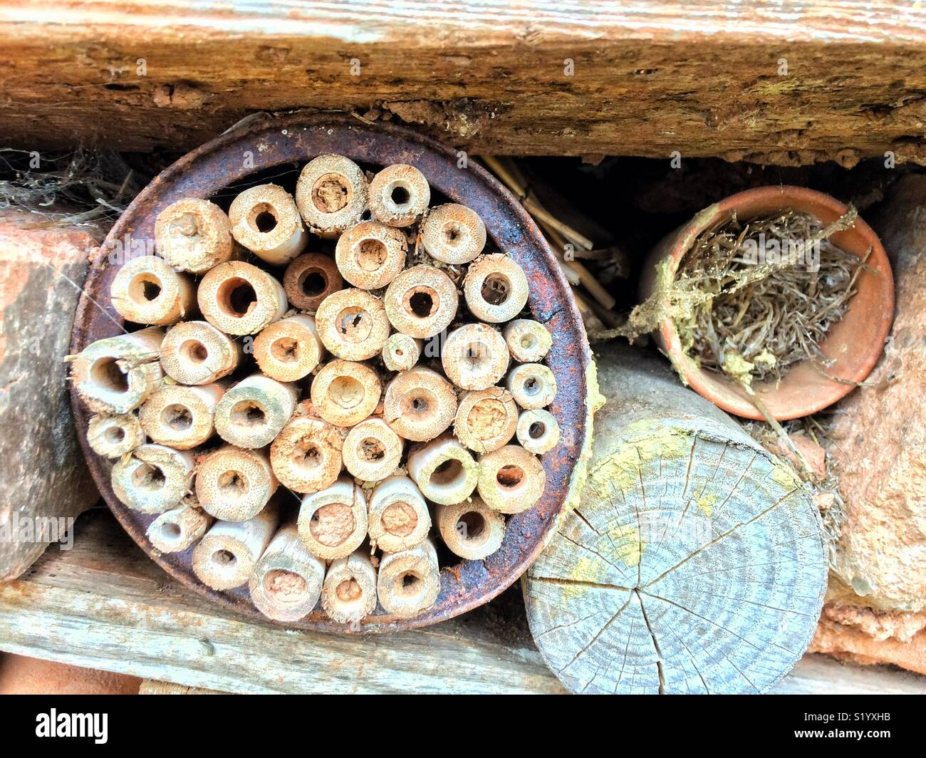 A bug house is used in conservation for creepy crawlies to overwinter and breed in. - Stock Image