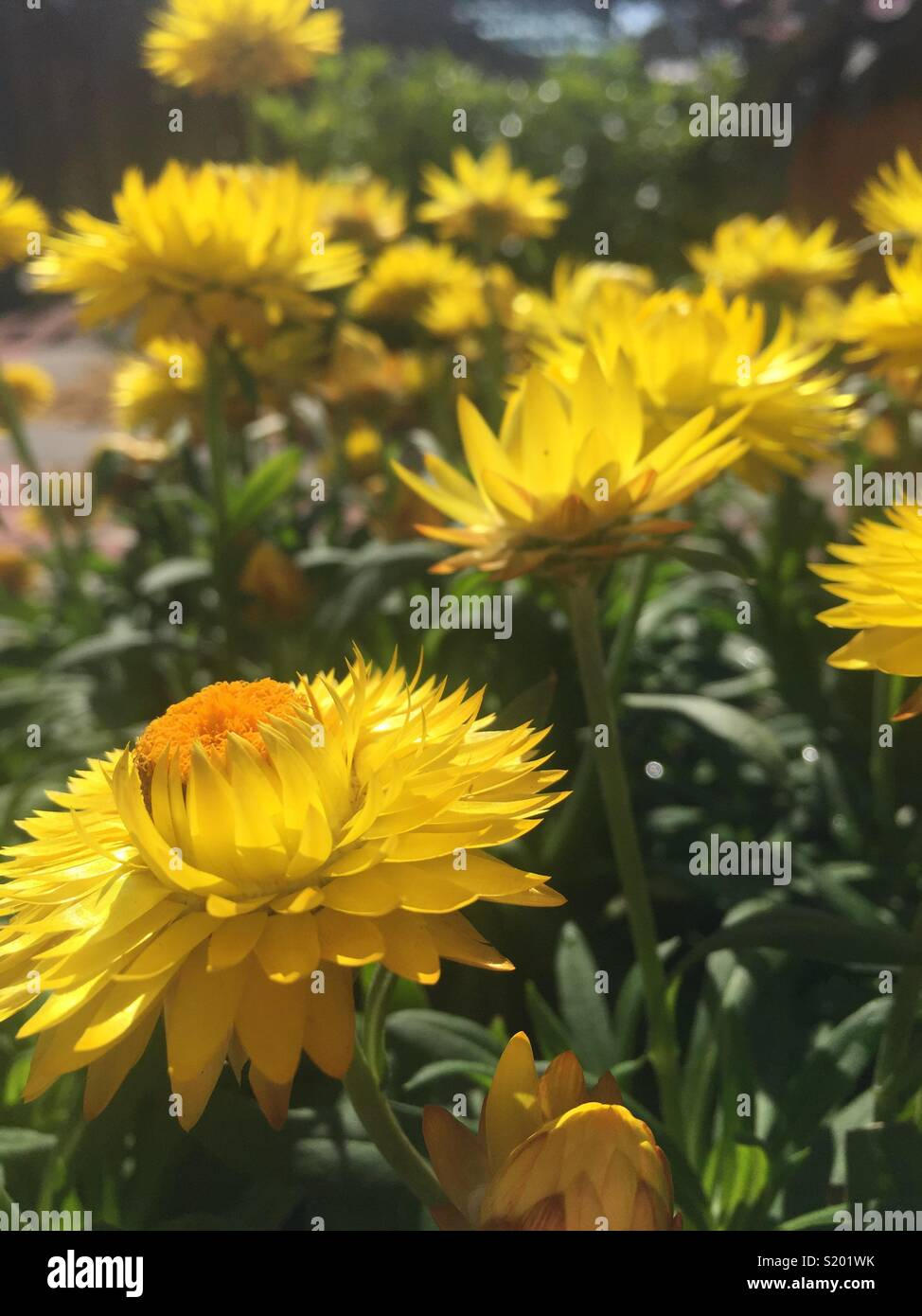 Florida Flowers In Spring Stock Photo 311017439 Alamy