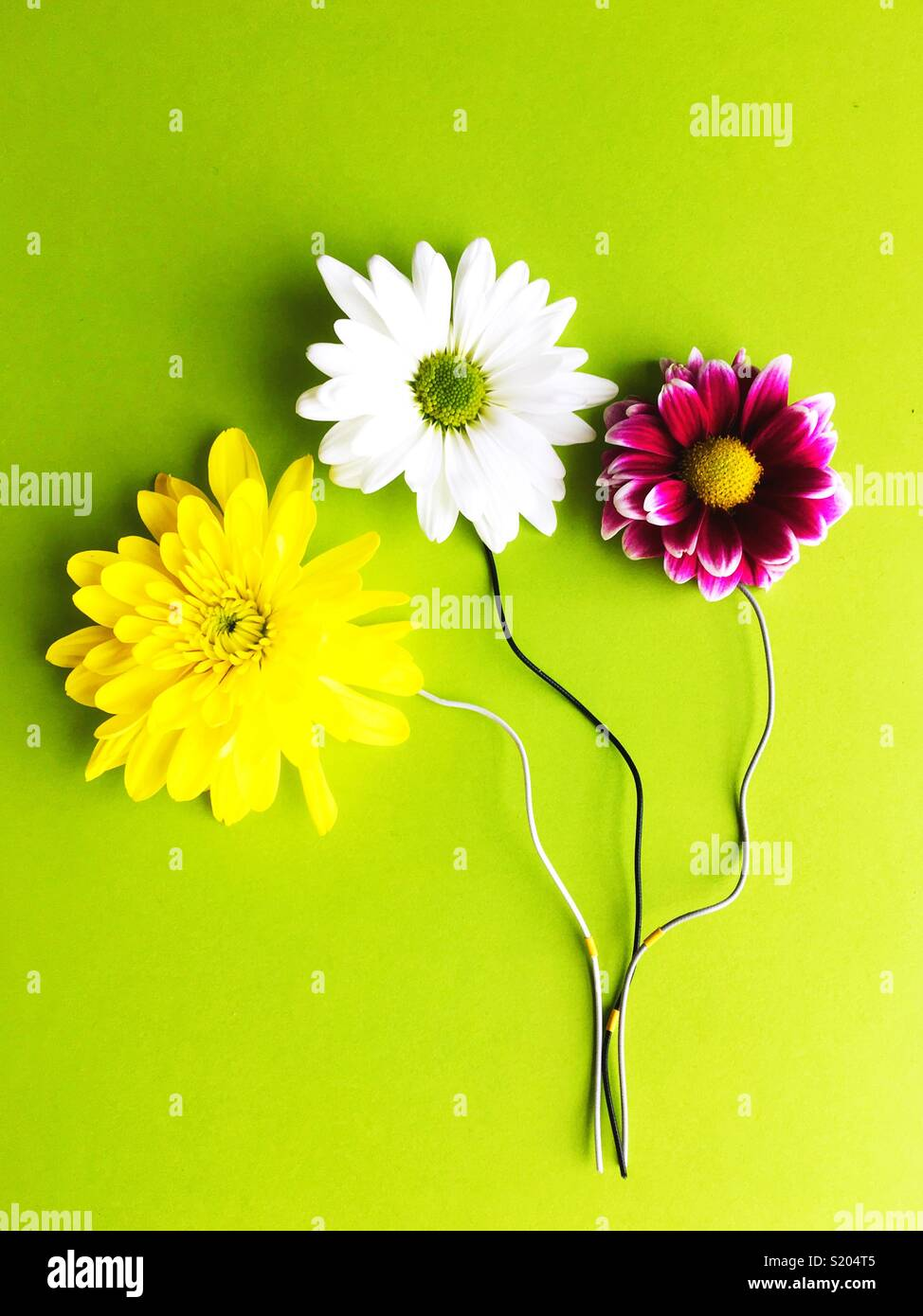 Flowers with electrical wires for stems. Stock Photo