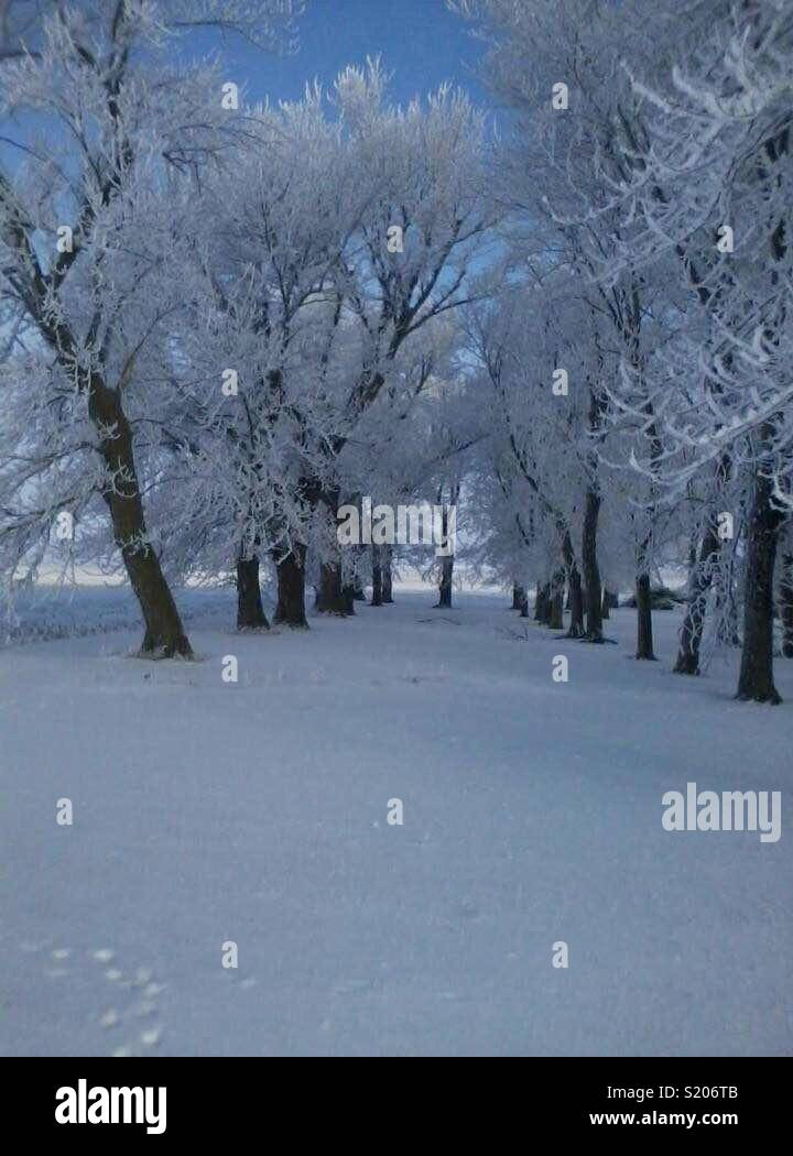 Una mañana muy fría que asta los árboles se cubren de blanco - Stock Image