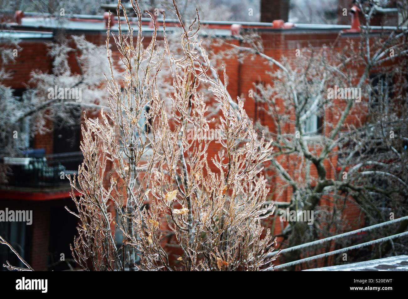 Frozen tree top - Stock Image