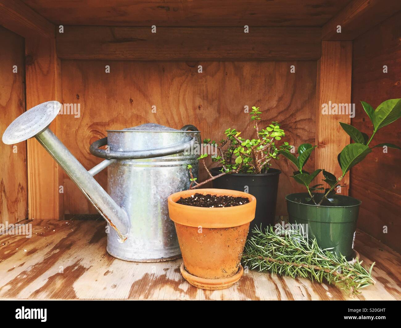 Potted plants and watering can. Gardening. Potting soil. Wood shed ...