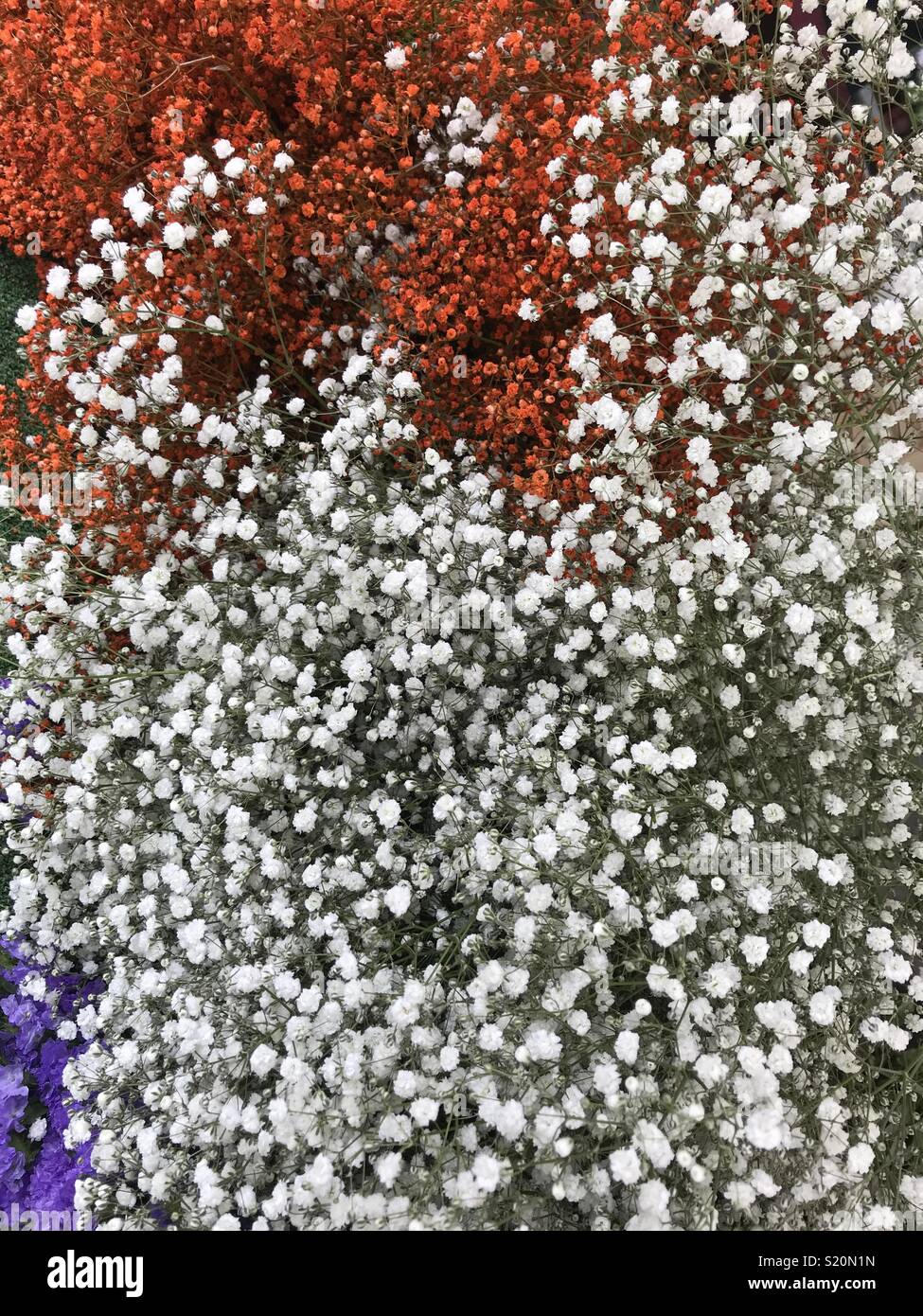 Orange And White Tiny Flowers Known As Baby S Breath Or Gypsophila Used For Home Flower Decorations Or With Wedding Bouquet Paris Market Stock Photo Alamy