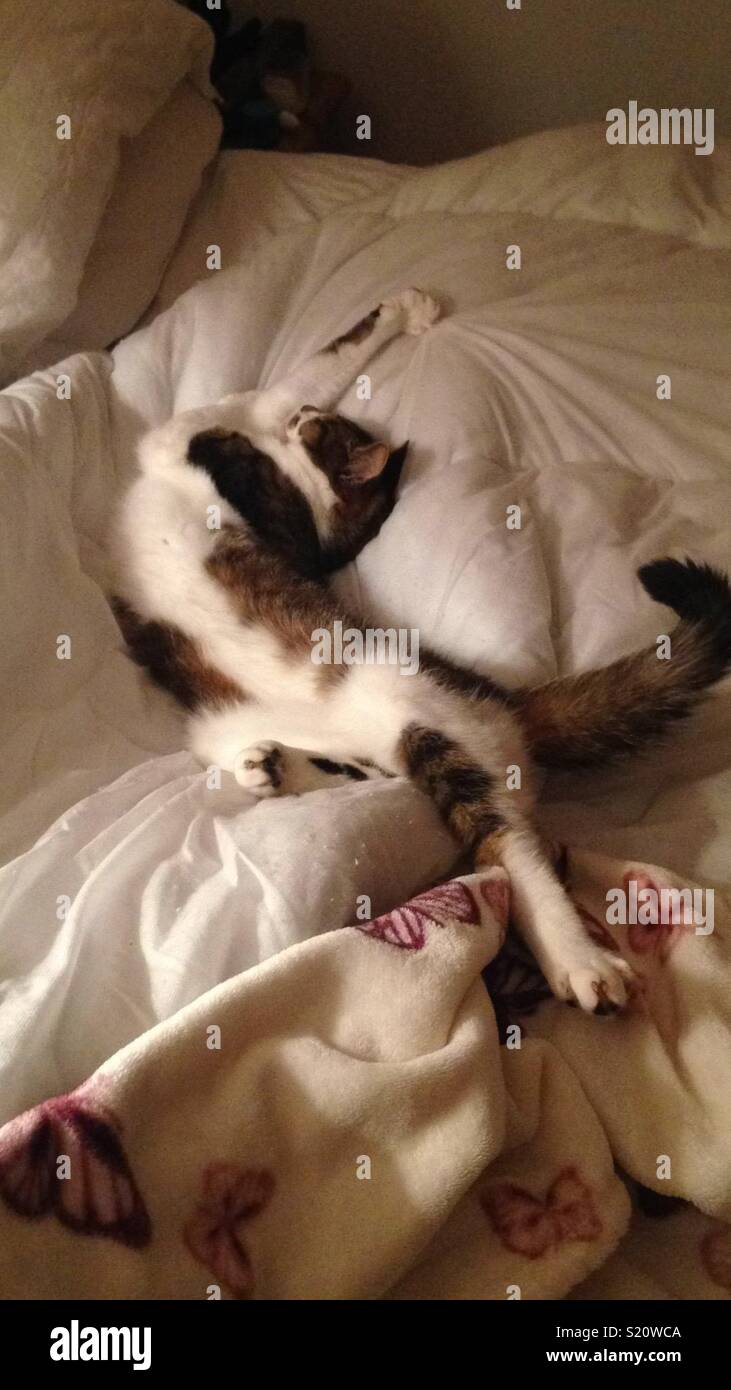 Gizmo really knows how to get comfy! - Stock Image