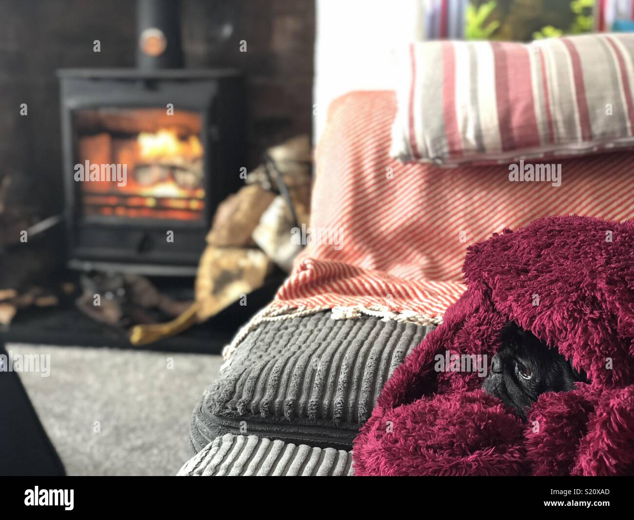 Snug as a pug in a rug - Stock Image