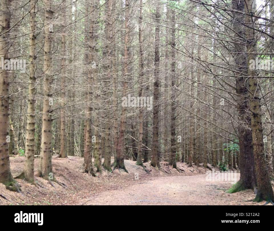 Chatelherault nature walk. A cold spring morning - Stock Image