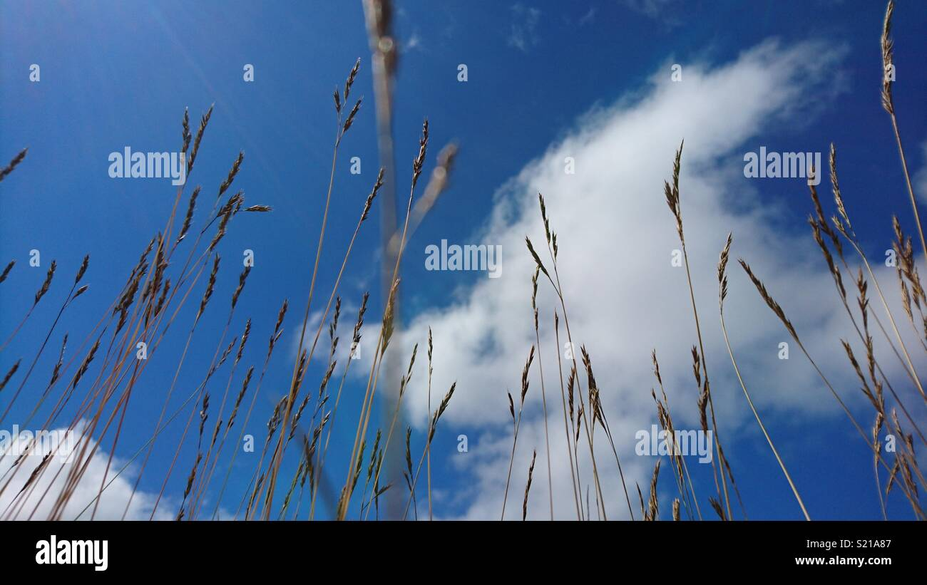 Reach for the clouds - Stock Image