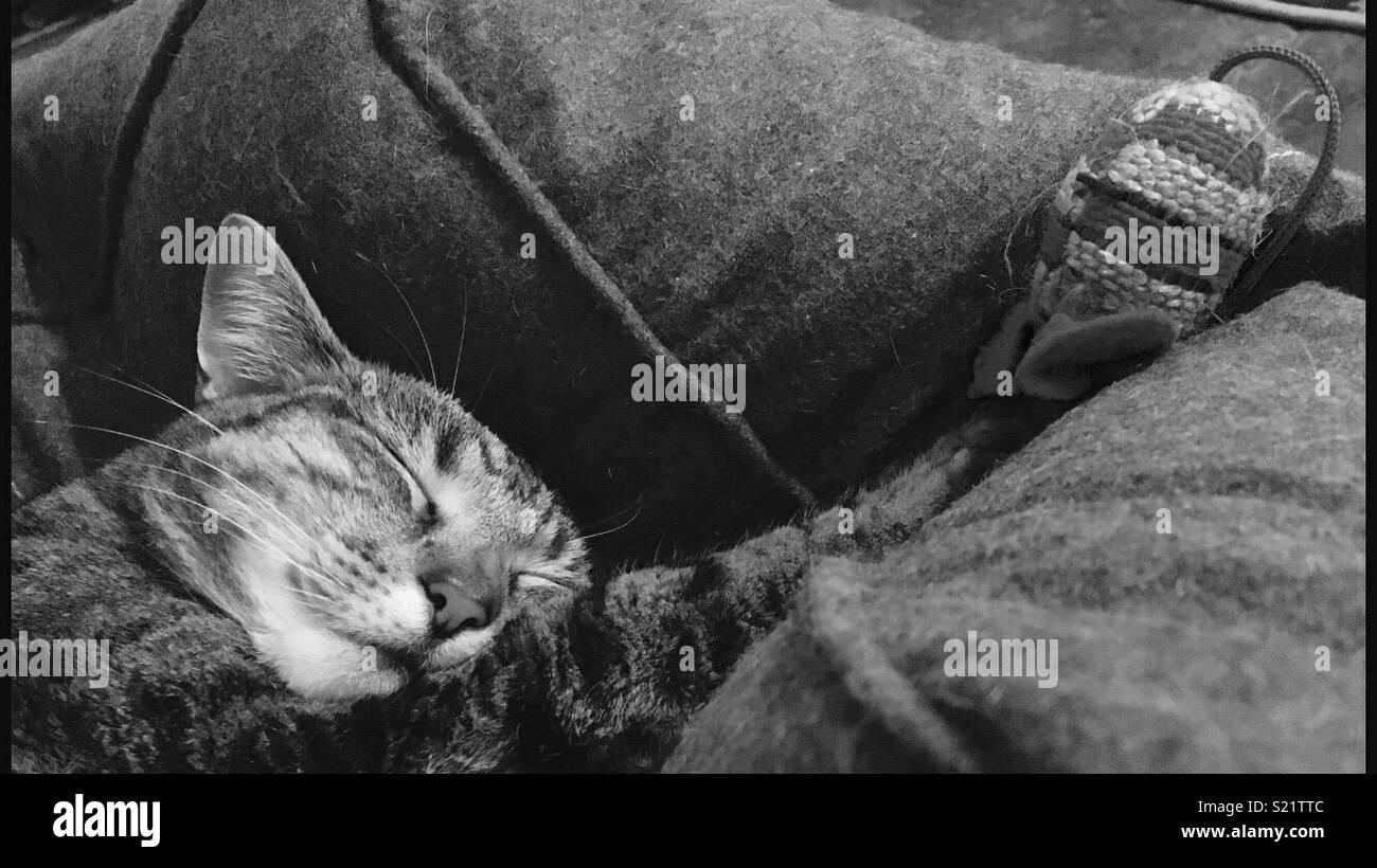 Sweet dreams - Stock Image