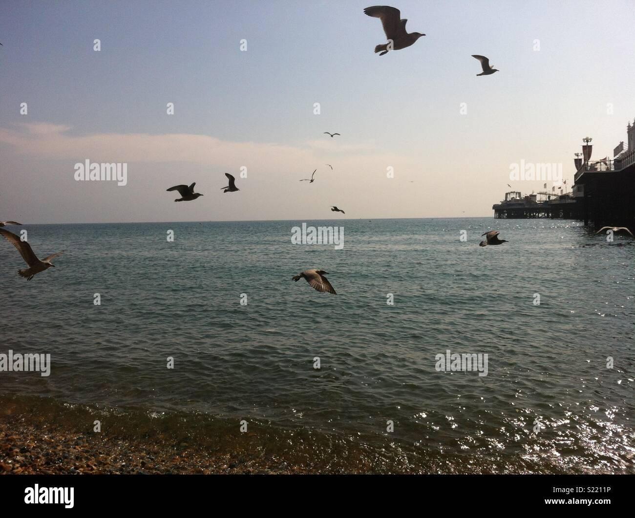 Seagulls fly away - Stock Image