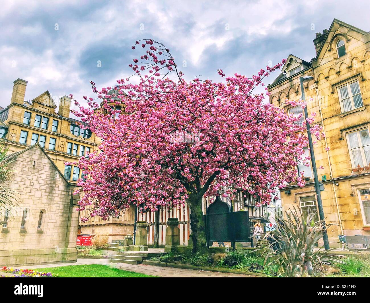 Blossom in Cathedral Gardens, Manchester - Stock Image