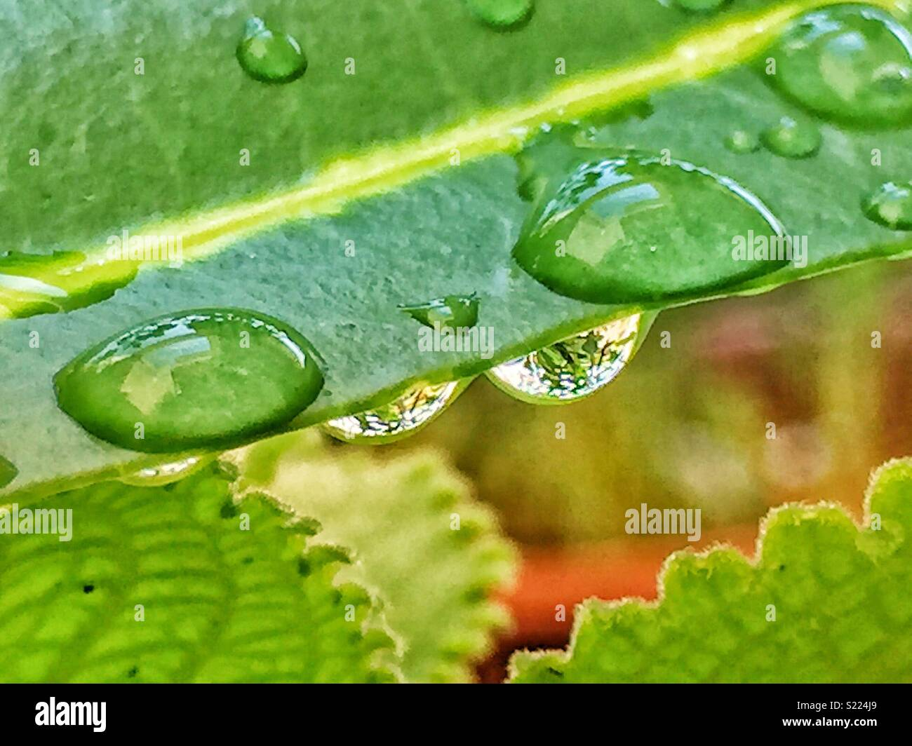 Waterdrop on leaf - Stock Image