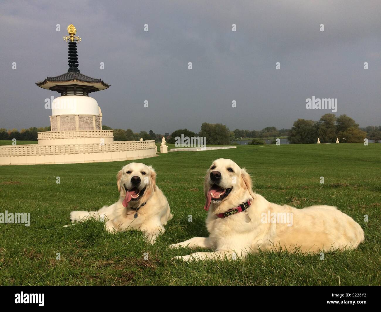 Temple dogs - Stock Image