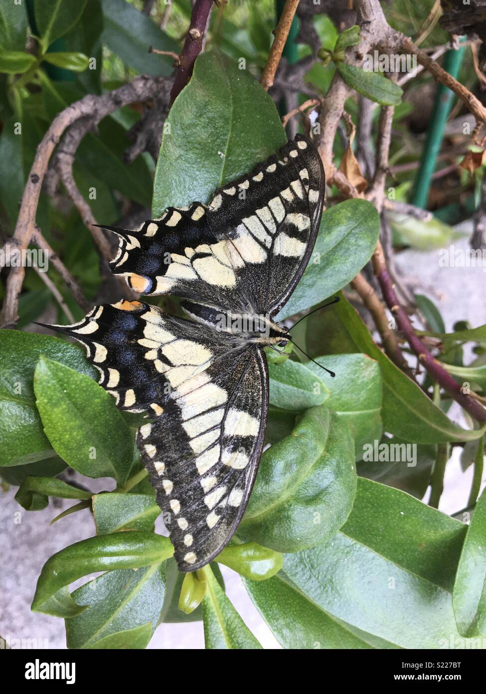 Butterlfy in the wild #nature #calming - Stock Image