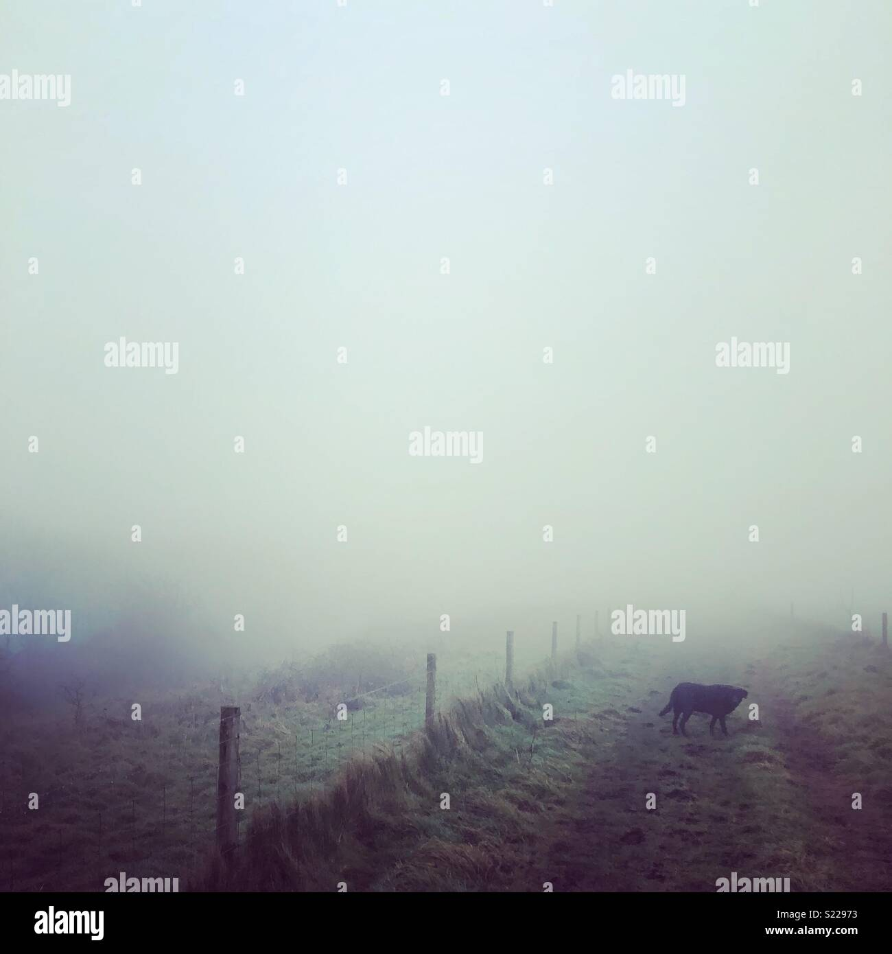 Foggy dog walk - Stock Image