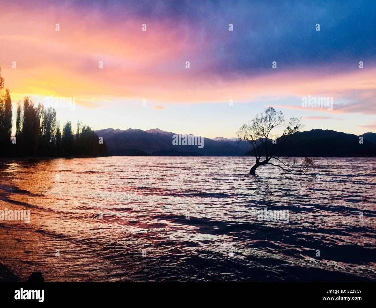 Wanaka Tree, Lake Wanaka, New Zealand - Stock Image