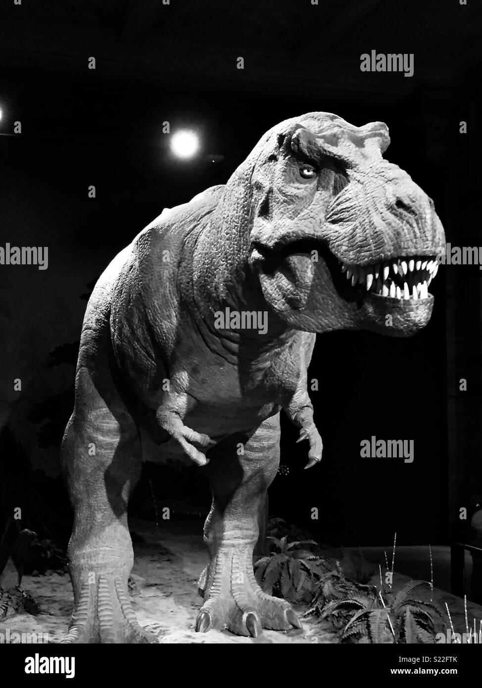 Scary T-Rex Dinosaur - Stock Image
