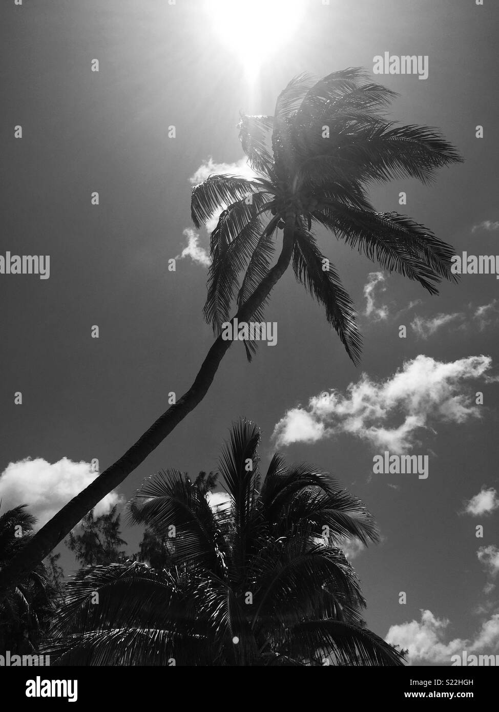 Grand Cayman Black and White Stock Photos & Images - Alamy on turtle farms in the usa, turtle farm grand cayman weddings, turtle farm isla mujeres, turtle island before columbus, turtle farm cayman islands, turtle reef grand cayman, turtle tank in grand cayman, cayman islands map, turtle underwater map,