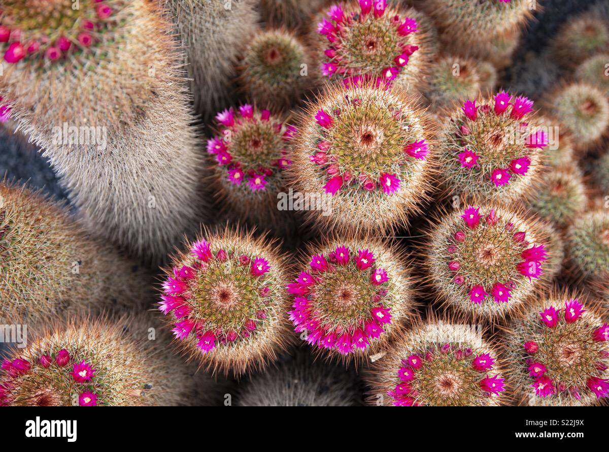 Colourful Cactus Flowers These Stunning Pinks And Whites Growing In