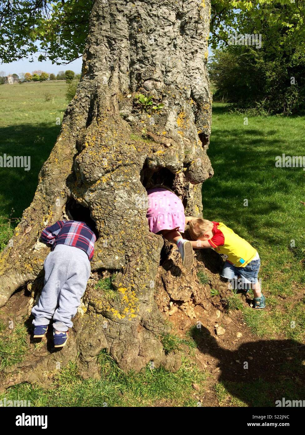 Children playing by a large old tree in the countryside - Stock Image
