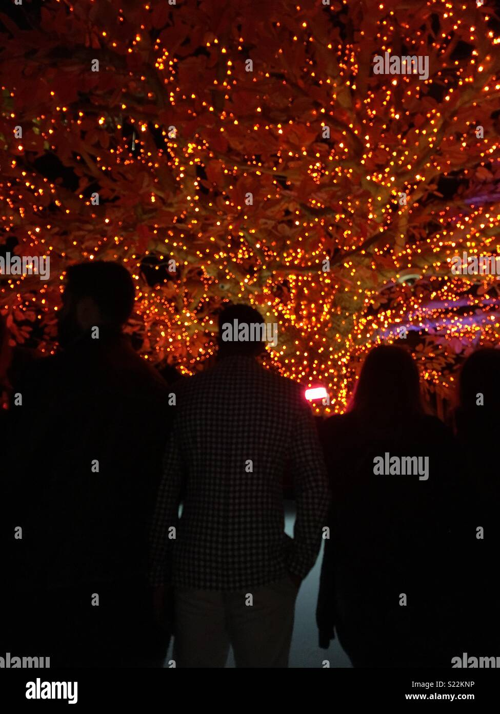 People queuing to buy drinks at an outdoor bar at night, under a tree sparkling with lights, taken at Sushisamba, London. - Stock Image