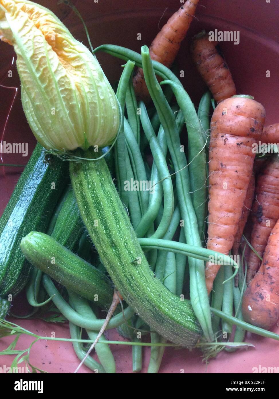 Homegrown vegetables - Stock Image