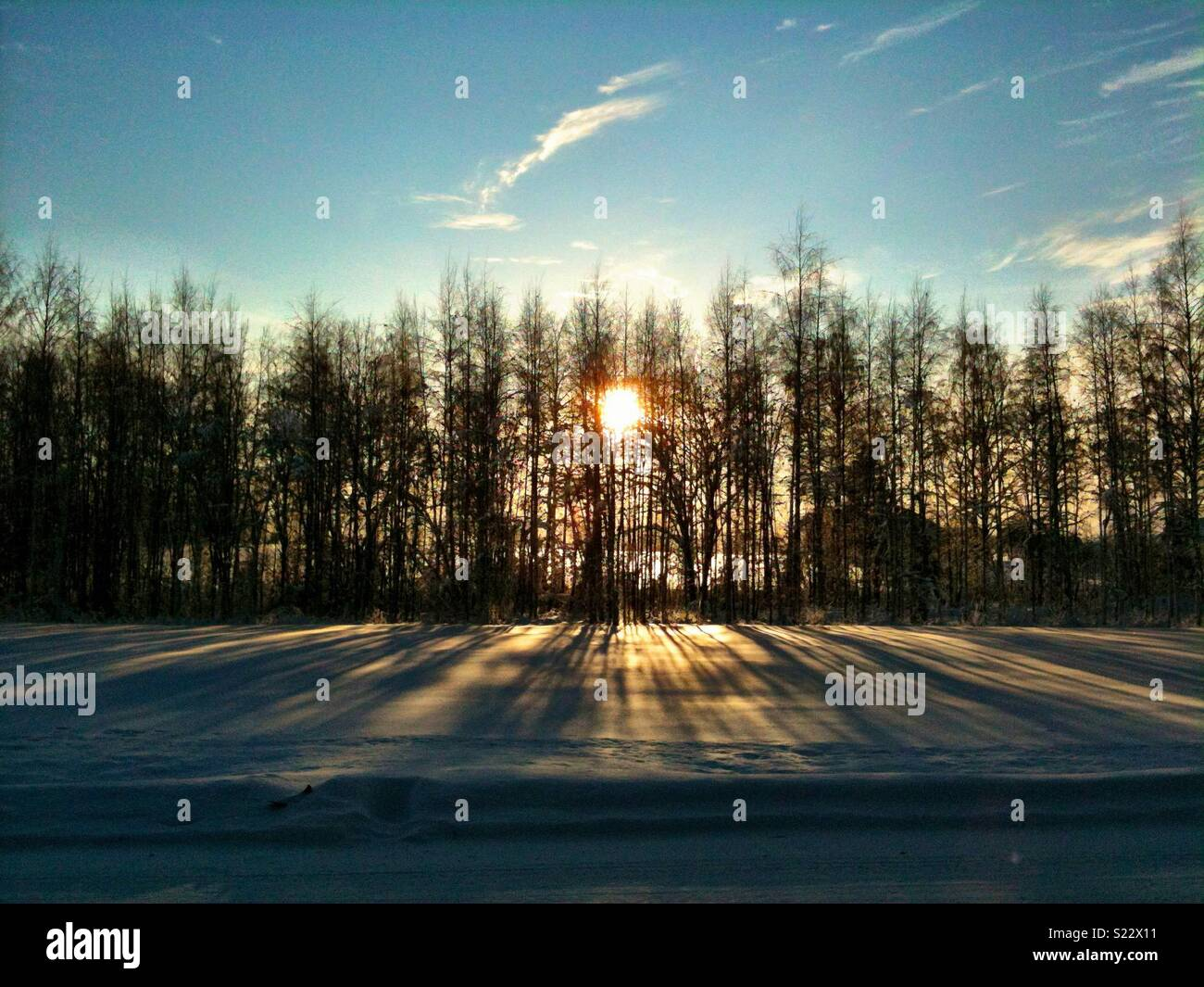Sun rising behind trees casting long shadows on the snow Stock Photo