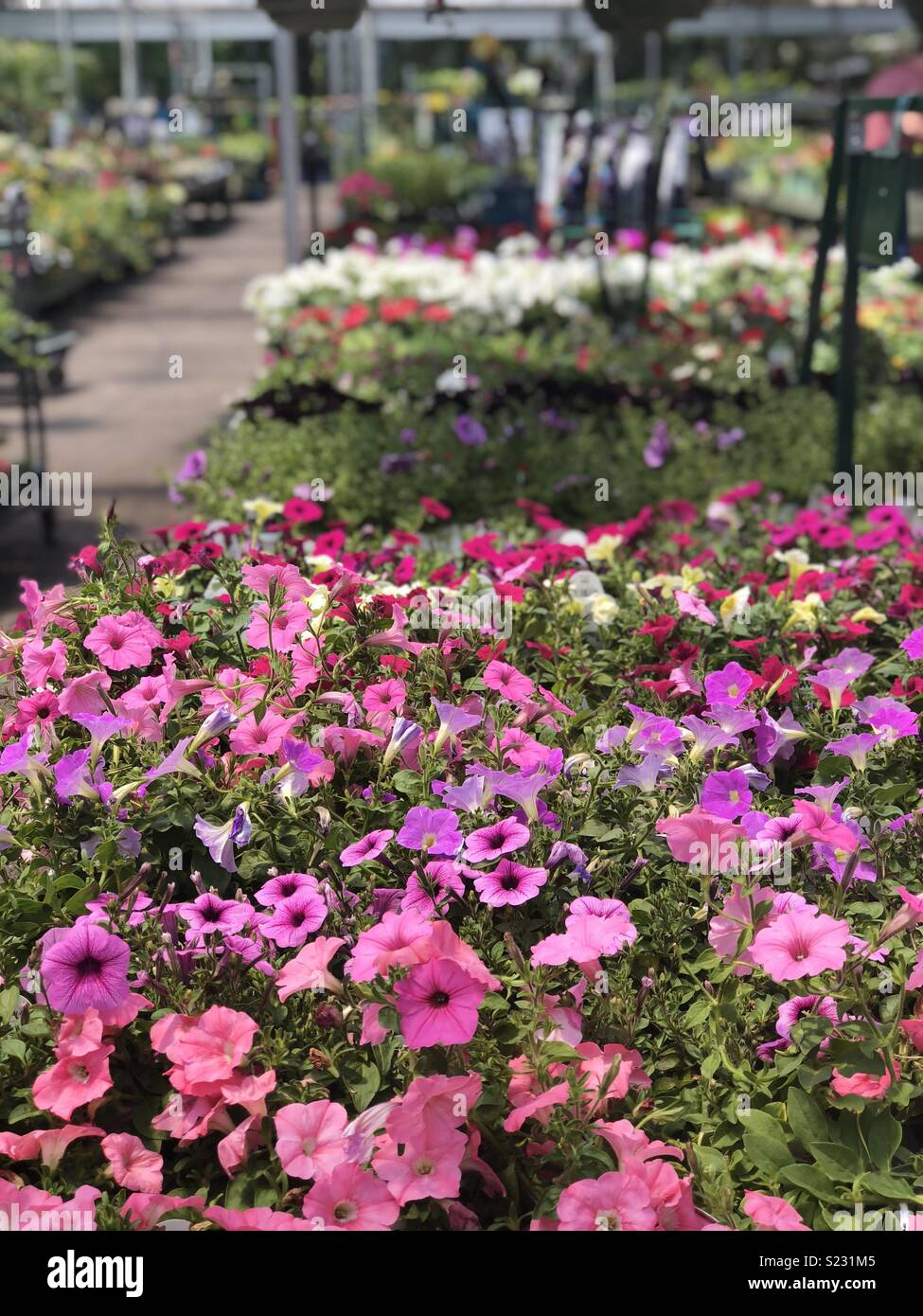 Saturday At The Garden Center Buying Bright Colorful Spring Flowers