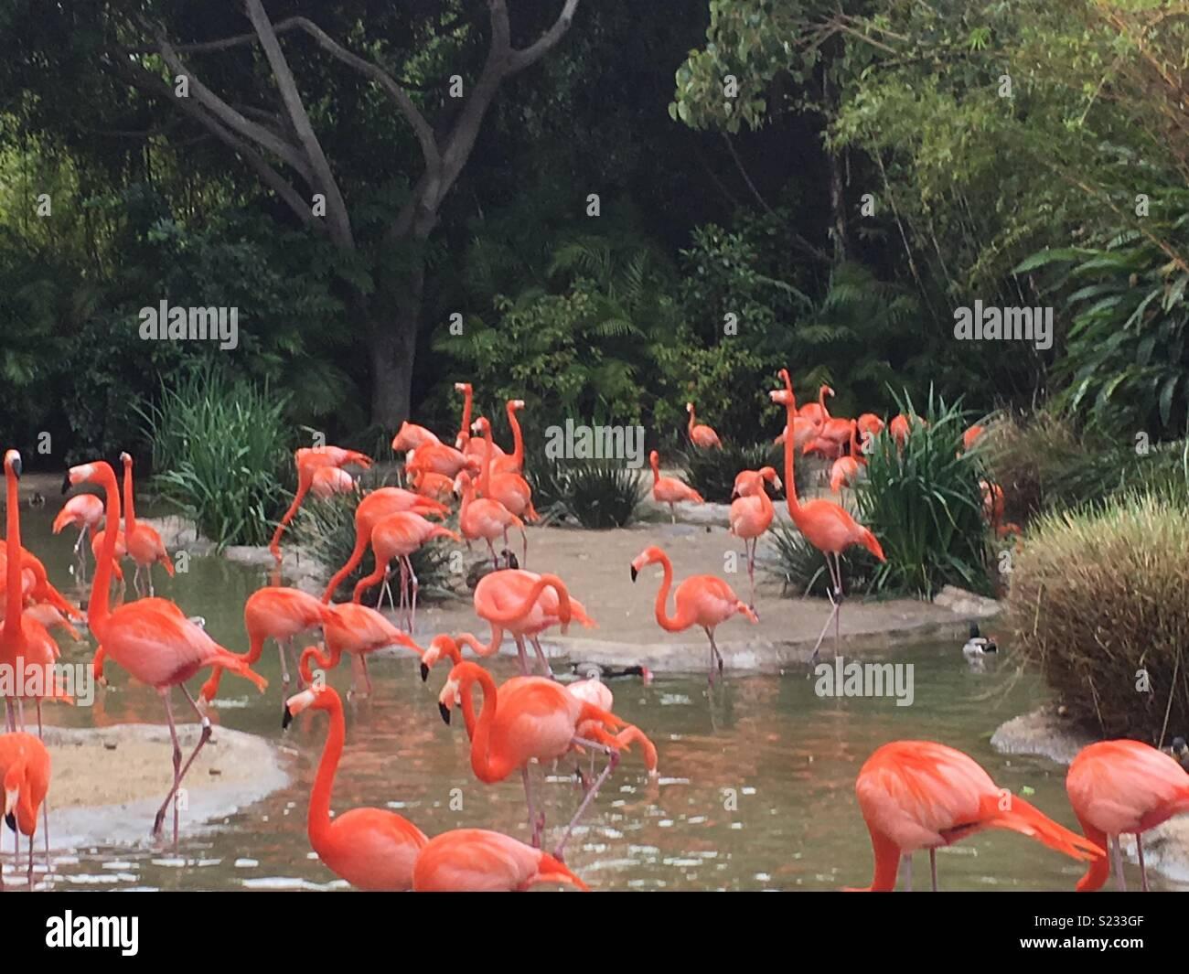 Flock of flamingoes Stock Photo