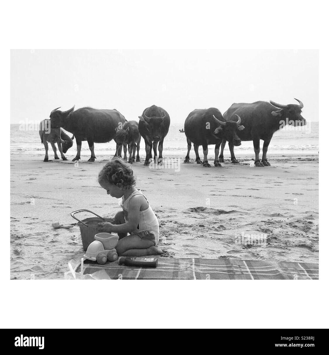 Lantau island, Hong Kong, my daughter filling a bucket with sand, and being completely  unfazed by the herd of water buffalo gathered a few feet behind her - Stock Image