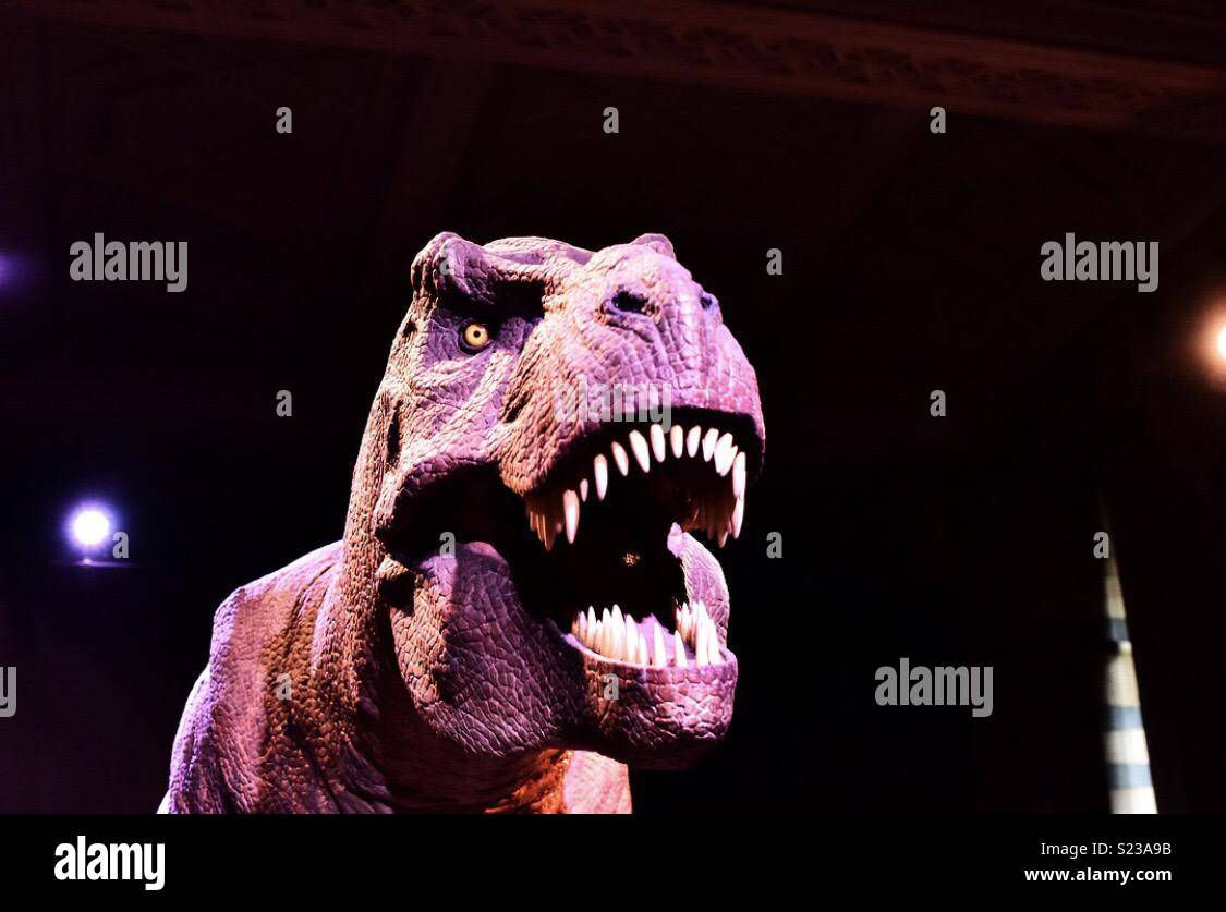 T-Rex display at the Natural History Museum, London, UK. April 2018. - Stock Image