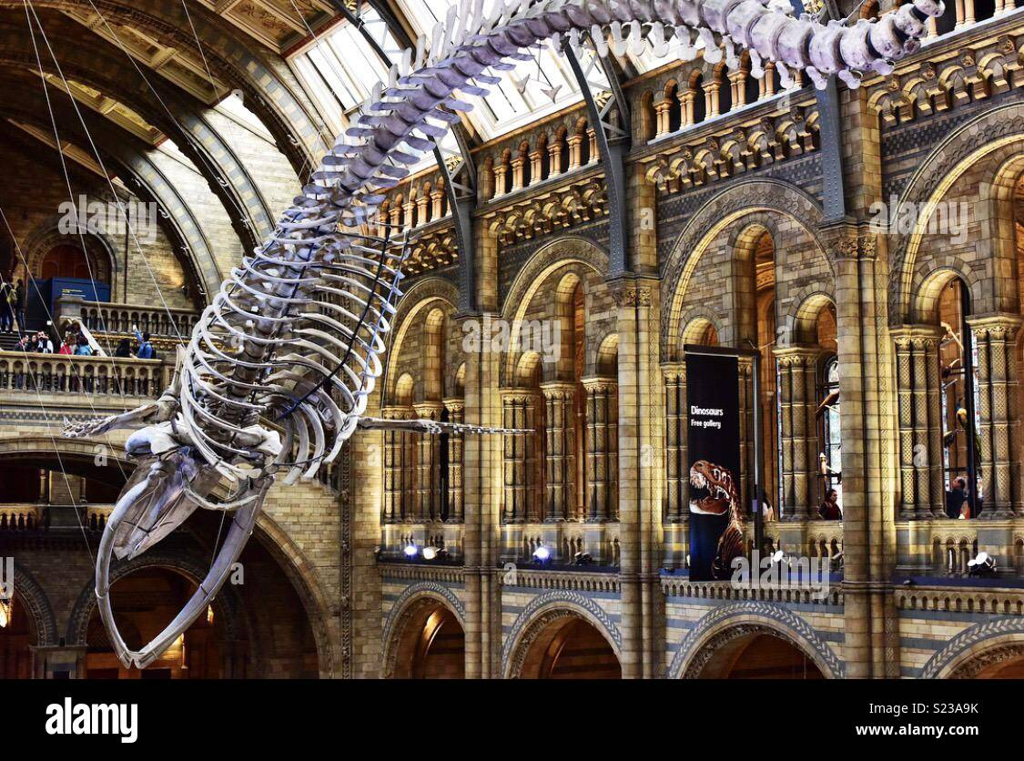 In the Natural History Museum, London, UK. April 2018. - Stock Image