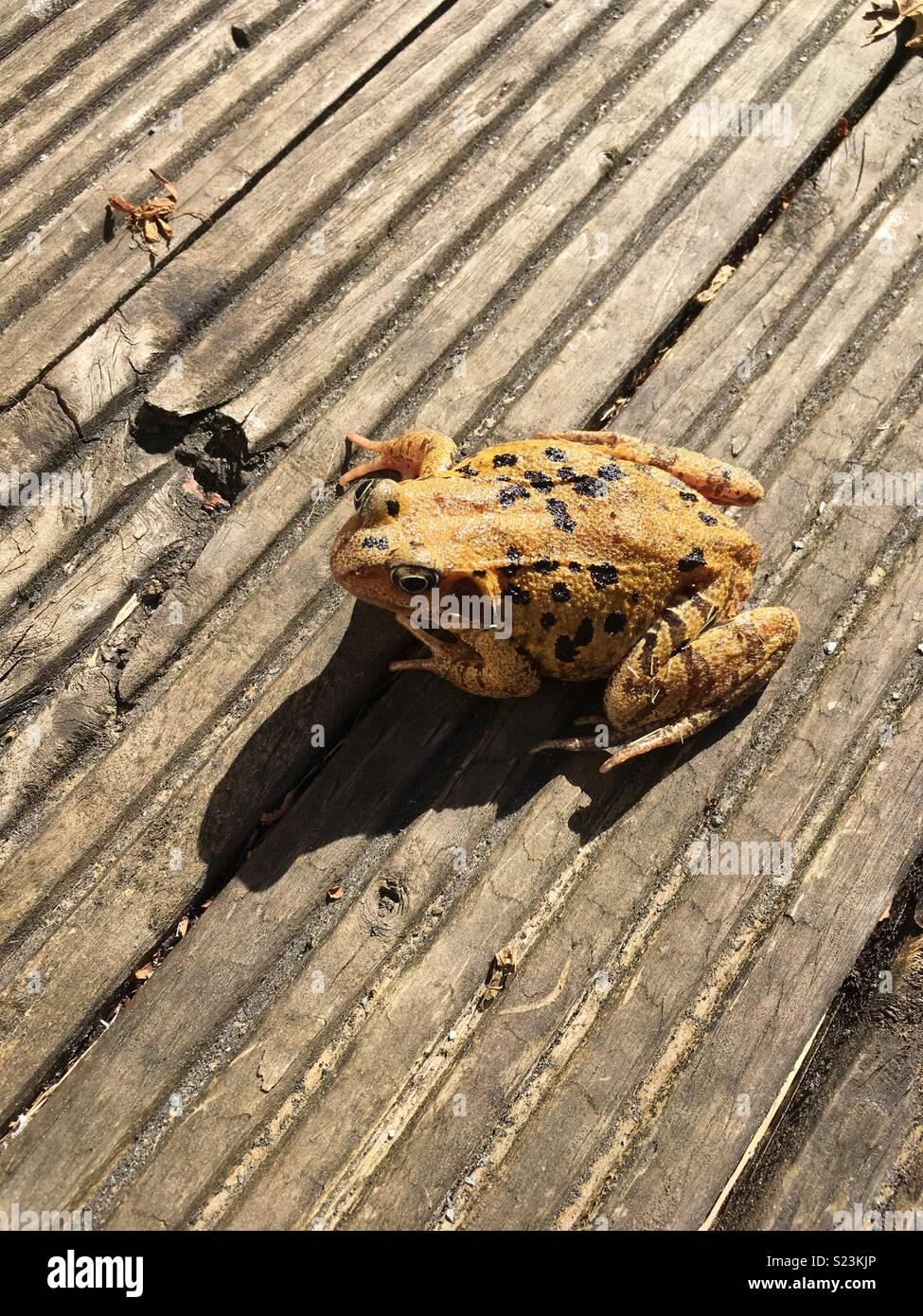 Frog posture - Stock Image